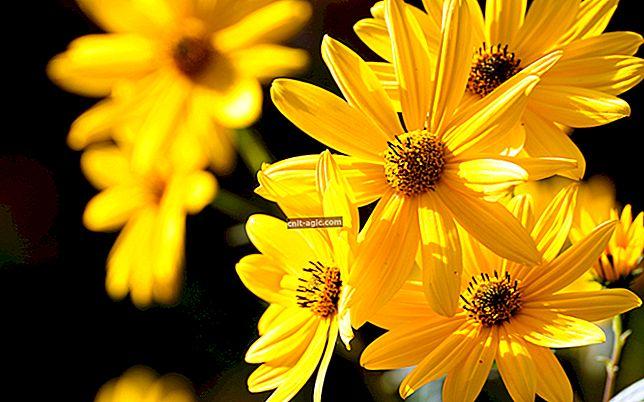 Gule blomster foto