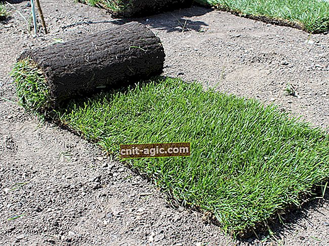 Planteplanting