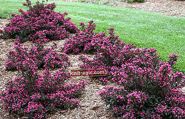 Vakre blomstrende busker - bilder og navn