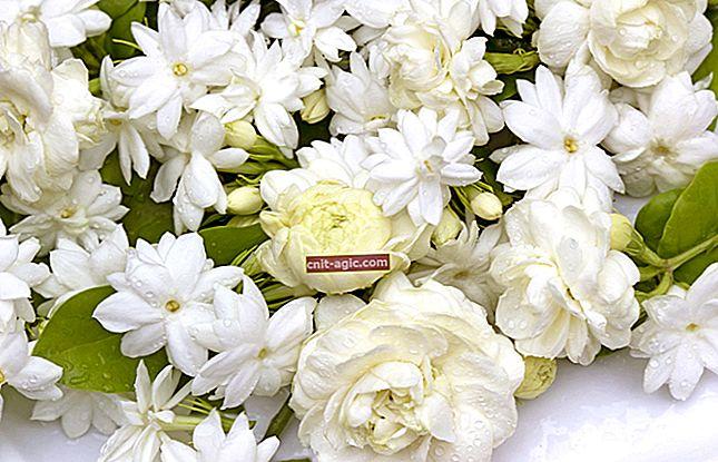 Foto af hvide blomster