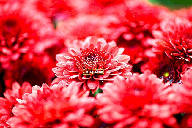 Røde blomster foto