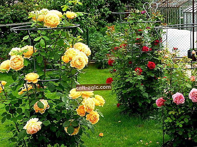 Roser i haven foto