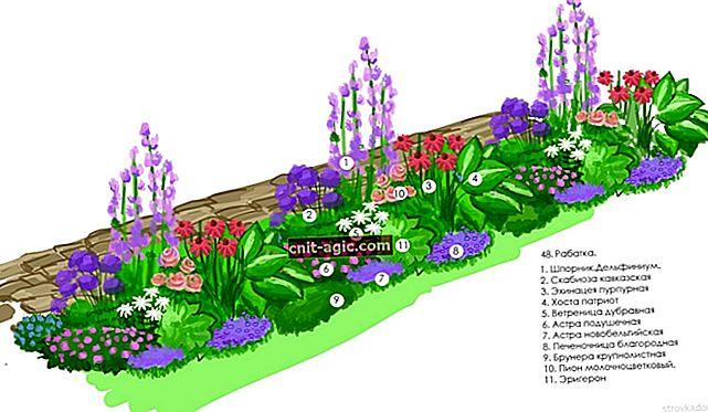 Storslået blomsterbed med pæoner