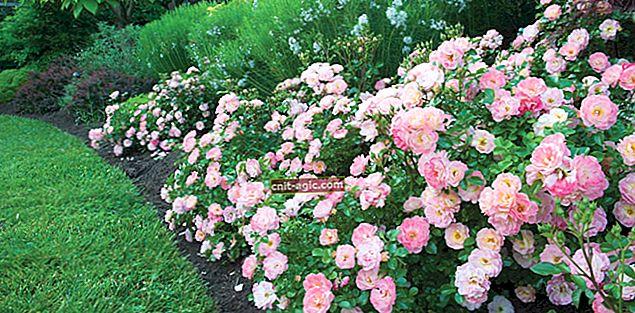 Bunddække roser