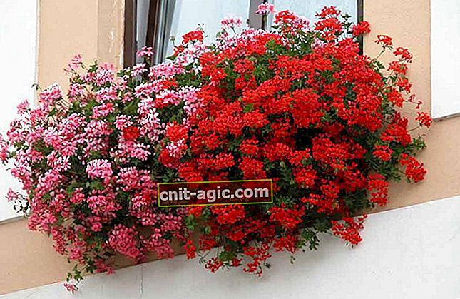 Ampel planter