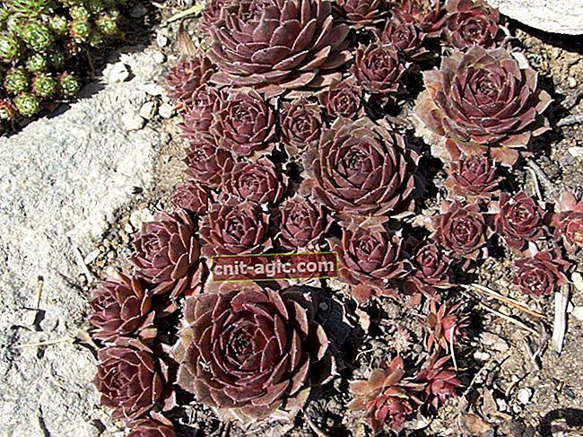 Planter og blomster til jorddækning