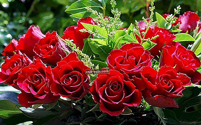 Smukke rosenblomster
