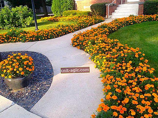 Flores e plantas para a orla ao longo dos caminhos