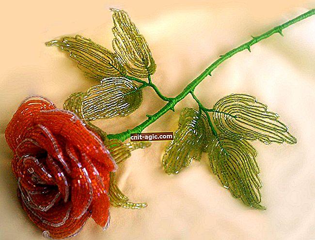 Rosa sem espinhos