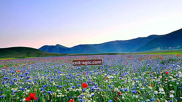 Blomstermark